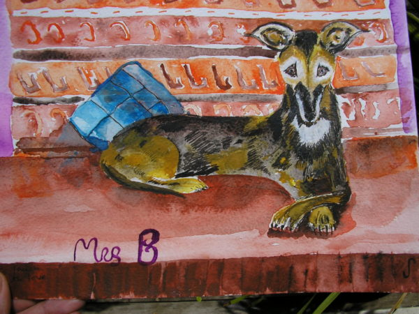 Dog sanctuary Barbados by Jules