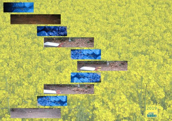 gardening by Silke Wolff
