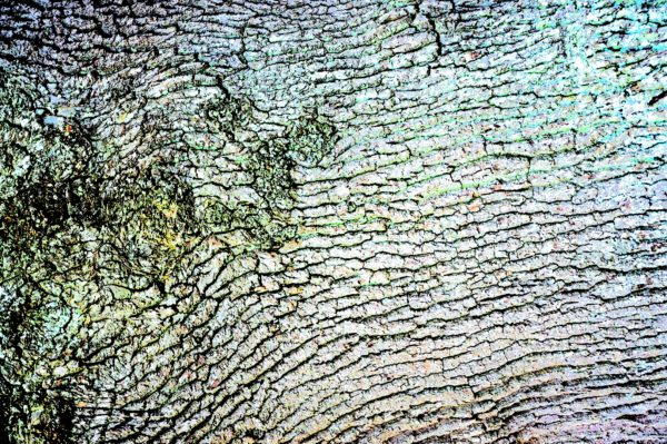 Bark by REaD Rhymes