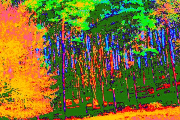 Forest-Fire.jpg by REaD Rhymes