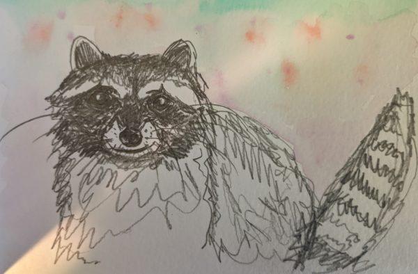 Raccoon postcard by Ana Tewson-Bozic