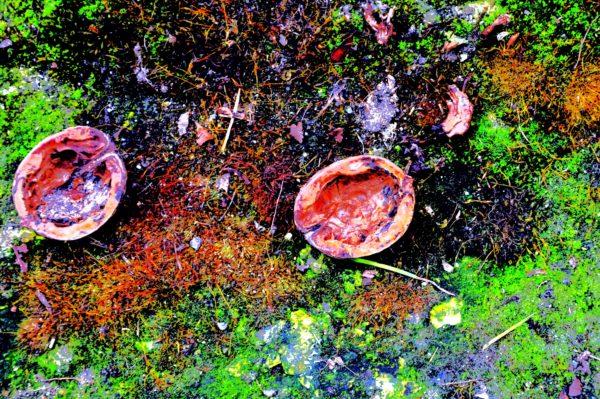 Nuts.jpg by REaD Rhymes