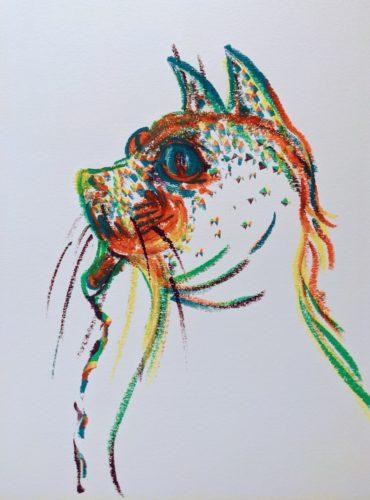 Sealcat by Ana Tewson-Bozic